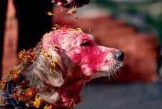 kukur tihar festival for dogs http://www.meanwhiler.me/2016/06/21/kukur-tihar-festival-beautiful-festival-dogs/