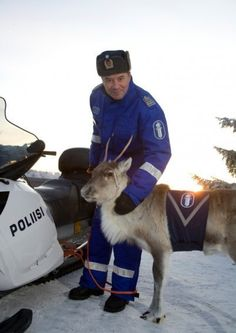 A finnish police reindeer, appearing mostly in PR functions to raise awareness in traffic safety. Finland Country, The Beautiful Country, Baltic Sea, Perfect World, Helsinki, Arctic, Denmark, Reindeer, Norway