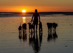 A man and his dogs by Cheryl Nestico on 500px