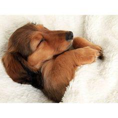 HEY SUNDAY. We love long lies, dark brews and duvets. Happy sunday folks!  #sunday #morning #brew #liein #sleepy #cute #funny #sundays #friends #love #dogsofinstagram