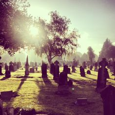 Beautiful morning in Glasnevin Cemetery, so very peaceful.