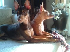 Evy & Binky