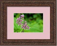 """The #holidays are approaching fast. Need the perfect gift? #fineart is always perfect for any occasion. And I can help you with a 25% off coupon code good for my fine art photography until 12/10/16 use code, XBLGXH at check out. Follow the link at the bottom to buy this print.  """"Tiny Purple Flower Buds""""  An older photo of mine, at the time I didn't know what this wildflower was, now I know it's Joe Pie Weed. A critical wild flower for bees and butterflies. When these buds open you can be…"""