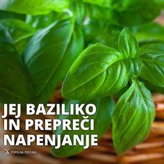 Veliko jedi si ne moremo zamisliti brez bazilike, ki je ena od najpopularnejših začimb na svetu. Precej raziskav je tudi pokazalo, da imata bazilikin čaj in njeno eterično olje, precej zdravilnih lastnosti. Obstaja okoli 60 vrst bazilike, njeno poreklo pa je iz Indije.  Bazilika je poznana po svojem antioksidativnem delovanju, ki ščiti ožilje in srce. Je naravni antibiotik.