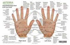 Hand & Foot reflexology chart indicating possible essential oil uses for various reflex points. Itメs great used as reference, education, or for class handouts. Essential Oil Chart, Essential Oils For Pain, Essential Oil Uses, Essential Tremors, Latissimus Training, Foot Chart, Reflexology Massage, Reflexology Points, Foot Reflexology Chart