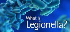 What is Legionella