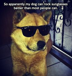 Here's a dog who know's how to rock shades and still be cool.