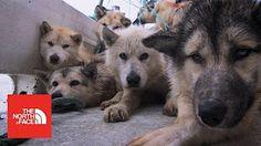 The Great Siberian Traverse - YouTube