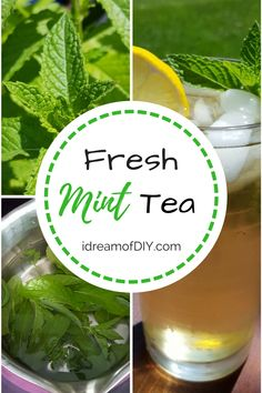 Fresh Mint Tea (some say Meadow Tea) is an easy drink will help you beat the heat and feel fancy doing it! Uses For Mint Leaves, Mint Leaves Recipe, Fresh Mint Leaves, Fresh Mint Tea, Mint Iced Tea, Mint Recipes, Herb Recipes, Recipes With Fresh Mint, Gardens