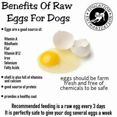 BENEFITS OF RAW EGGS FOR DOGS⁑ 1) provides a healthy coat. 2) good source of protein. 3) good source of: vitamin a, riboflavin, flat, vitamin b12, iron, selenium and fatty acids. 4) shell is also full of vitamins and calcium. *Recommended feeding: 1 raw egg every 3 days.