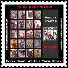 Animal Action, Kill List, Power Of Social Media, Baby Dogs, Beautiful Dogs, Animal Rescue, The Fosters, Dog Cat, Adoption