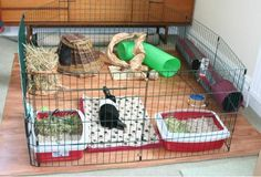 "A relatively standard indoor ""puppy pen"" style setup, providing adequate space for an indoor rabbit. A baby mini piggy. A baby rabbit. Basically if it's a baby I want it. Indoor Rabbit House, House Rabbit, Indoor Rabbit Cage, Rabbit Hutch Indoor, Hamsters, Chinchillas, Rabbit Pen, Pet Rabbit, Rabbit Playpen"