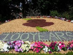 100 years, flowers - Clifton Park, Rotherham Remembrance Day Poppy, Clifton Park, Poppies, Outdoor Decor, Flowers, Poppy, Royal Icing Flowers, Flower, Florals