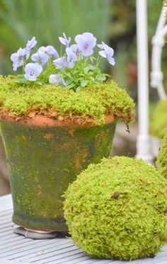 moss and pansies - lovely!