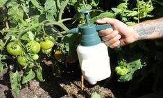 szódabikarbónás vízzel permetezz Organic Gardening, Gardening Tips, Growing Gardens, Garden Pests, Grow Your Own Food, Companion Planting, Edible Garden, Growing Vegetables, Dream Garden