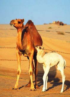 Mom and baby near Abu Dhabi city.