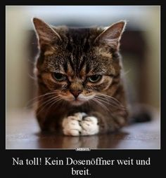 Just have to search Best Picture For Cute animals chibi For Your Taste You are looking for something, and it … Funny Cats And Dogs, Cats And Kittens, Cute Dogs, Facebook Humor, Image Facebook, Animals And Pets, Funny Animals, Super Cute Animals, Cute Cat Gif