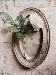 A rose on an old pewter dish...   odile lm
