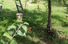 <p>* * * Wrześniowy poranek. Babie lato delikatnie powiewa wzdłuż gałęzi jabłoni. Słońce już niżej położone oświetla zacienione zakątki ogrodu. Jest chłodniej niż zwykle – miło zatem powitać ten dzień gorącą domową szarlotką. Dzień dobry. Skład: (forma o średnicyo wymiarach: 28 cm0 (przepis dla 4-6 osób) ciasto: 300 g mąki 200 g masła 50 g […]</p>