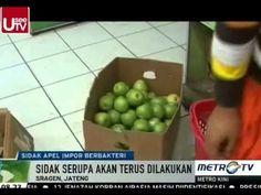 Sidak Apel Impor Berbakteri di Sragen Jateng - Berita Terbaru Hari ini 1...