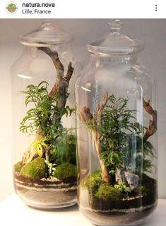 Bottle Terrarium, Cactus Terrarium, Bottle Garden, Garden Terrarium, Indoor Water Garden, Indoor Plants, Culture Bio, Paludarium, Vivarium