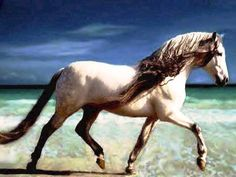 Andalusian horse breed. You don't have to be a cowboy (or cowgirl) to appreciate the beauty of horses. I think they are amazing, powerful and graceful at the same time.
