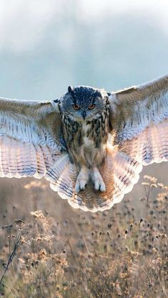 *Let the Magic begin. Owl Photos, Owl Pictures, Animals And Pets, Cute Animals, Owl Wings, Great Horned Owl, Beautiful Owl, Owl Bird, Pretty Birds