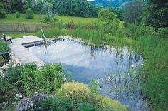Make a Splash: Natural Swimming Pools Swimming Pool Pond, Natural Swimming Ponds, Natural Pond, Pond Landscaping, Ponds Backyard, Pond Design, Landscape Design, Design Design, Water Features In The Garden
