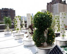 Hydroponic Gardening rooftop hydroponic garden - New York restaurateur John Mooney has redefined the concept of farm-to-table with his amazing rooftop hydroponic garden. The food served at the Bell, Urban Agriculture, Urban Farming, Hydroponic Gardening, Hydroponics, Sustainable Gardening, Urban Gardening, Manhattan Restaurants, Vertical Farming, Tower Garden