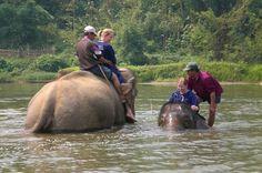 Sexy Women riding bareback barefoot on Elephants in the Jungle/Sexy Frauen reiten ohne Sattel barfuß auf Elefanten im Dschungel . Trinis Elefant geht auf Tauchstation...
