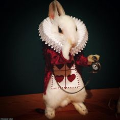 I'm late! Taxidermy - the art of creating lifelike models from real specimens - was initially popular during Victorian times, but the science has seen a resurgence recently. This mouse has been styled as the white rabbit from Alice in Wonderland
