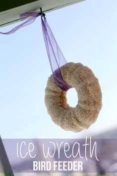 Make a ice wreath to feed the birds all winter