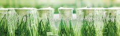Esse Organic Skincare - Rättvisemärkt och Ekologisk hudvård