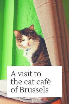 What to do in Brussels? Looking for interesting things to do in Brussels? You could visit Belgium's first cat café: Le Chat Touille in St-Gilles. Click here for story and photos: http://www.traveling-cats.com/2014/11/cats-from-saint-gilles-belgium.html (cats, cat café, Brussels, St. Gilles, Belgium, cat lovers, cafés in Brussels, interesting things to do in Brussels, where to eat in Brussels)