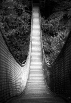 Entering the rainforest