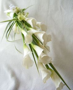 long white calla lilies