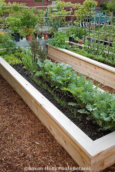 New raised bed vegetable garden made from sustainably farmed cedar wood; Jennifer Carlson garden