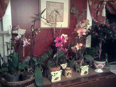 orchids!
