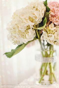 Wedding Hydrangea