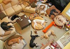 The doggie slumber party ended sooner than they are prepared.