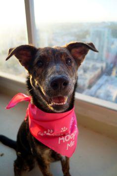 Adopt Me Bandana From The Dog Perk Corp On Pebbles California Labs