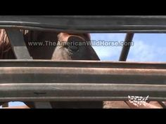 Share widely please so people will know what's going on.  Wild Horses & Renegades - Trailer.mov