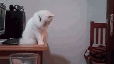 Cats knocking things off the table! 14 Funny and Hilarious Gifs! Look other funny, ridiculous and hilarious gifs, videos & pictures of cute cats on site! Bad Cats, Silly Cats, Cats And Kittens, Funny Cats, Funny Animals, Cute Animals, Crazy Cat Lady, Crazy Cats, Cool Cats