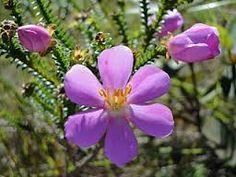 fauna e flora caatinga - Pesquisa Google