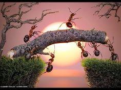 Andrey Pavlov takes insane macro pictures of ants. Pictures Of Ants, Macro Pictures, Sunset Pictures, Creative Photos, Cool Photos, Amazing Photos, Epic Photos, Vida Animal, Blog Fotografia