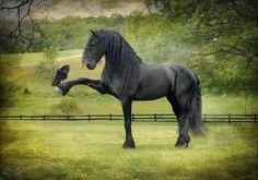 Horse Makes Friends With A Large Crow