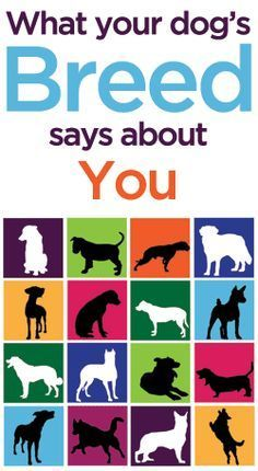 What Your Dog's Breed Says About You