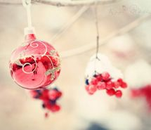 Inspiring picture berries, christmas, photography, red. Resolution: 400x266 px. Find the picture to your taste!