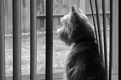 Dealing with the Loss of a Beloved Companion | petMD.com