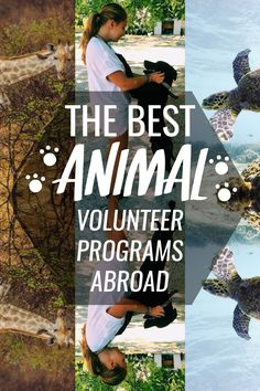 Volunteering with animals abroad is a fulfilling experience for those looking to combine a passion for travel and working with animals. Whether it's providing care within animal shelters, supporting the conservation of sea turtles, or marveling at majestic creatures like elephants, International Volunteer HQ has an Animal or Wildlife conservation volunteer project to cater for all kinds of animal lovers.